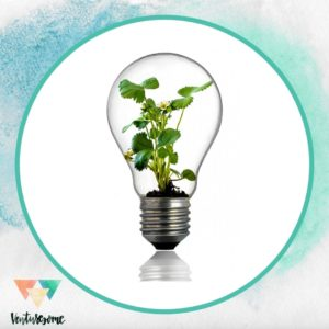 lightbulb with plant growing within it